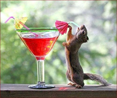 سنجاب و نوشیدن با نی