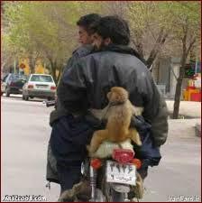 دوچرخهسوارها و میمون